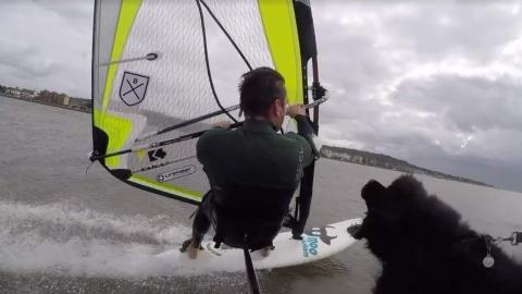 Hund attackerar vindsurfare
