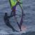 Profilbild för SurfRille